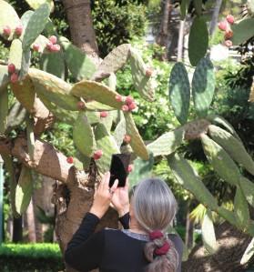 IMG_0819.wp-kaktus-petra