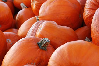 Orange-rote groe Krbisse