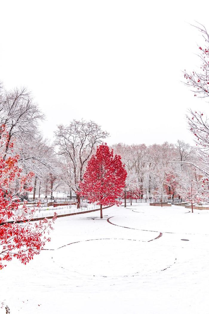 i-Winter-3